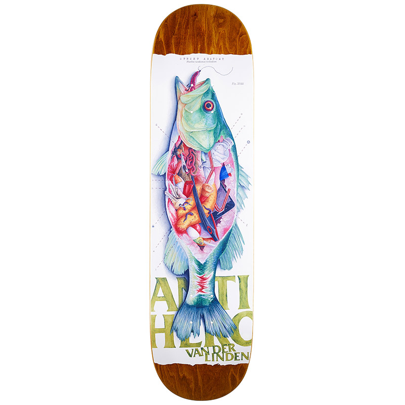 Anti Hero Daan Street Anatomy Skateboard Deck 8.25