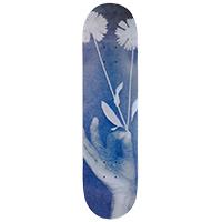 Isle Exposure Don Nguyen Skateboard Deck 8.125